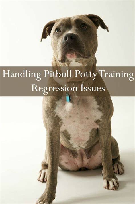 puppy potty regression pitbull puppy tips potty regression it is we and