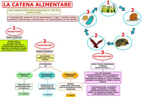 esempio di catena alimentare catena alimentare progetto ecosostenibilit 224