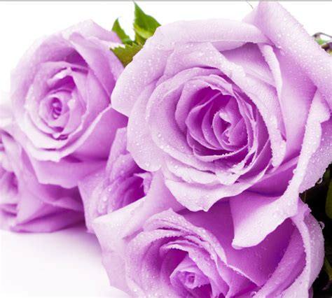 Send Flowers Ottawa - florist in hopewell va buy gifts and flowers online