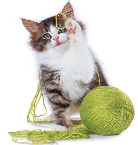 who plays cat retro vintage cat wool yarn pet cushion