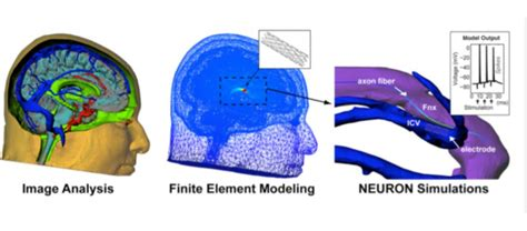 computational models of brain and behavior books computational modeling of endovascular brain