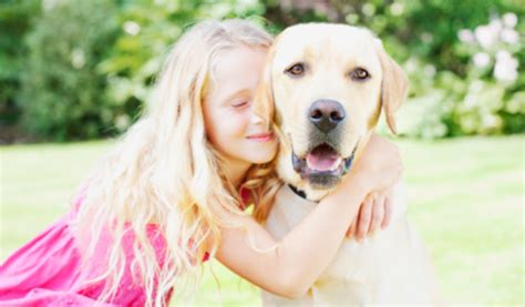 can dogs fevers can dogs get hayfever advice