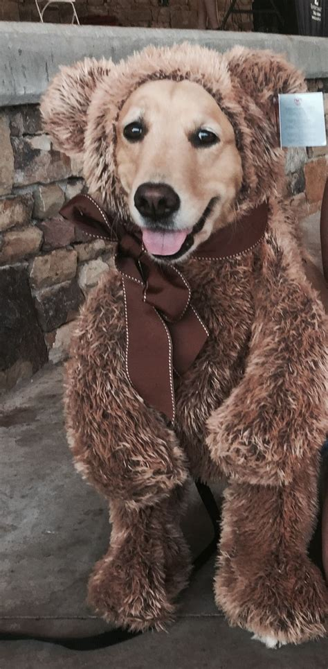 golden retriever costume for humans 1018 best costumes images on costumes costume ideas and