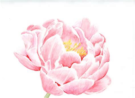 colour pencil technique botanicalartstalk