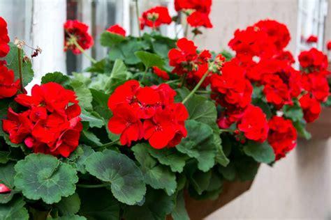 arredare terrazzo piante come arredare il balcone con i fiori non sprecare