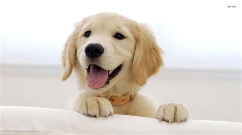 puppy photography 1080p wallpapers hd wallpapers high puppy wallpapers hd wallpaper cave