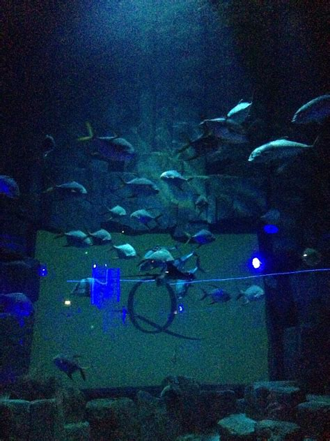 Lu Aquarium Celup where to throw a birthday in luxe
