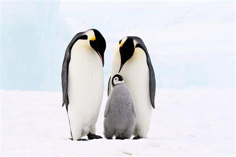 Penguin S penguin animal planet