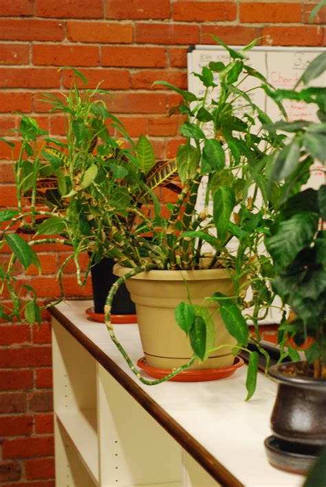 Best Office Plant | best office plants good plants for the office environment gardening know how