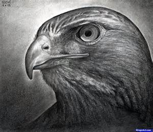 how to draw a hawk how to draw a hawk tailed hawk step by step birds