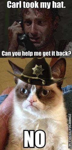 grumpy cat meme walking dead google search  walking