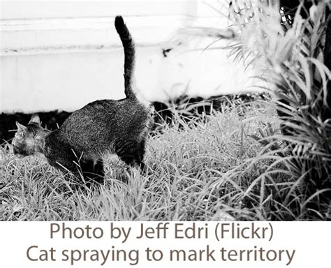 dogs marking territory in house marking territory in house 28 images how to stop a cat from spraying urine in the