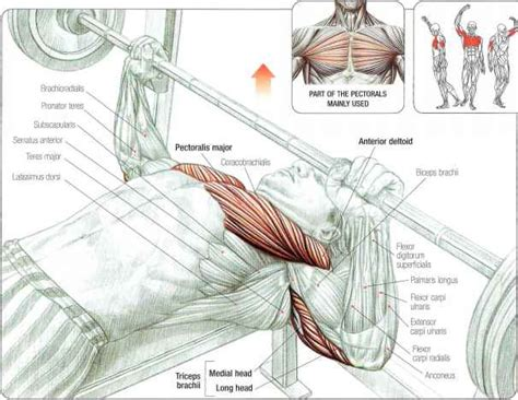 incline bench press muscles worked how to build the perfect pectorals all bodybuilding com