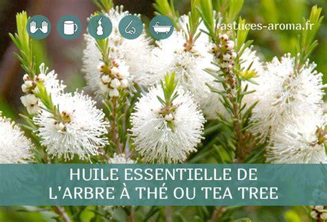 Teh Ou Tea fiche huile essentielle d arbre 224 th 233 ou tea tree