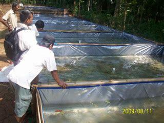 Bibit Lele Purwokerto probiotik organik persiapan kolam budidaya lele probiotik
