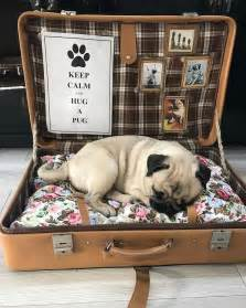 pug puppy bed best 25 pug ideas on pugs pug puppies and black pug