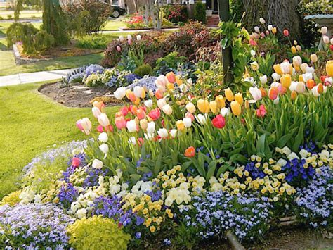 south central gardening tulips for spring color