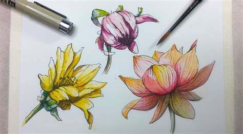 tutorial watercolor and ink how to draw and paint flowers with pen and ink and