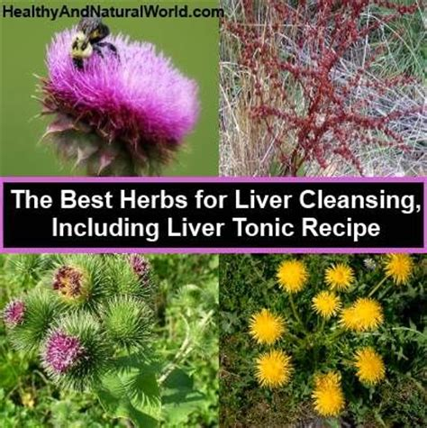 Top 5 Best Liver Detox Herbs by 17 Best Images About Milk Thistle On Medicinal