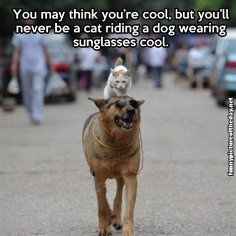 Dog With Glasses Meme - september 2013 page 5 creative image photos