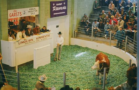 livestock auction integrated skills b thurs fall 16