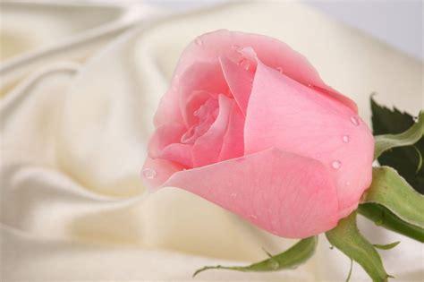 wallpaper for laptop roses roses wallpapers for desktop wallpaper cave