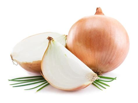 can dogs die from can dogs eat onions and not get sick carion