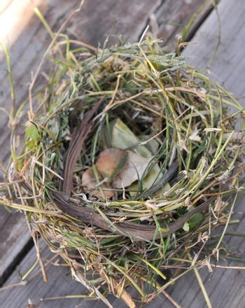 Do When You Build A Nest by How To Make A Bird S Nest Activity Education