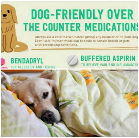 the counter meds for dogs friendly the counter medications iseeidoimake