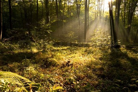 Morning Landscape Images