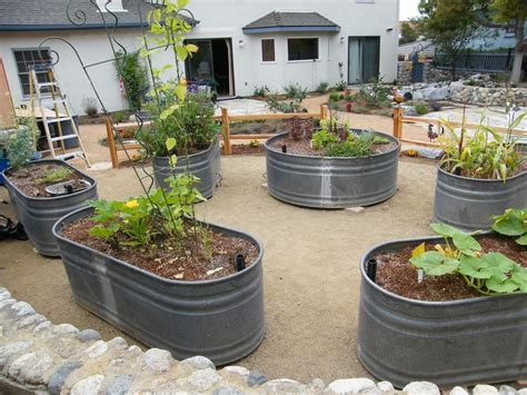 stock tanks used as raised vegetable beds gardening pinterest gardens them and sprays