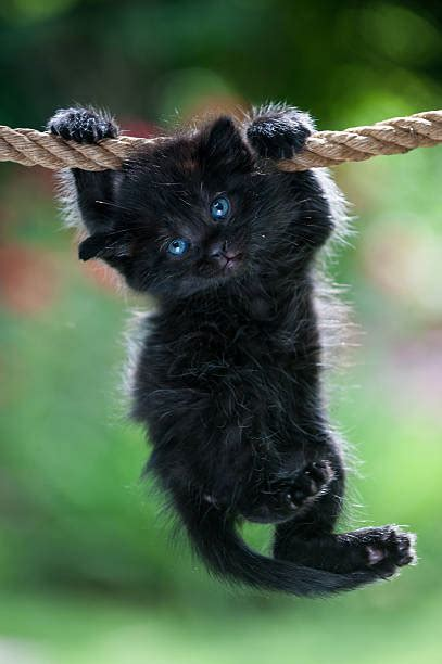black cat stock  pictures royalty  images istock