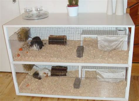 Kleiner Speisesaal Hutch by 25 Best Ideas About Guinea Pig Accessories On