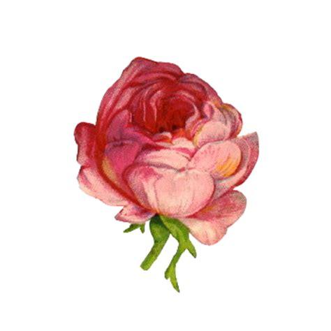flores png rosas fondos de pantalla y mucho m 225 s flores vintage png fondos de pantalla y mucho m 225 s