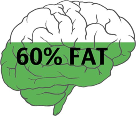 healthy fats and brain health how to build a healthy brain