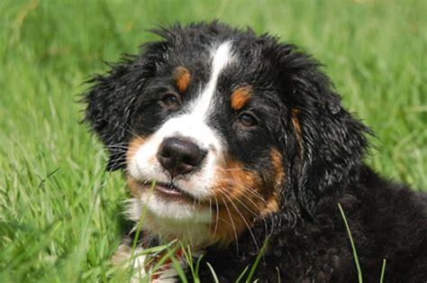 wann welpen stubenrein hundetraining hundeerziehung ohne stress hund