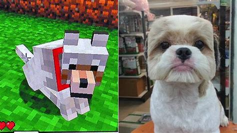 why do dogs turn their heads don t turn your into real minecraft kotaku australia