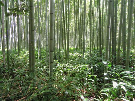 symbolism   bamboo archi livingcom
