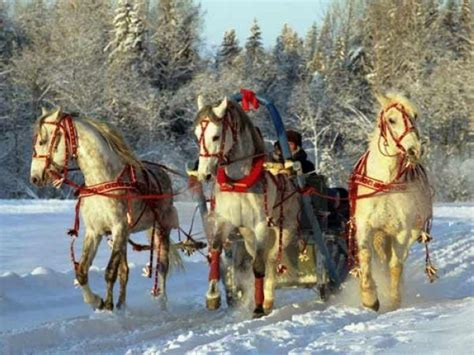 troika russia pixdaus horse camp russian winter horses