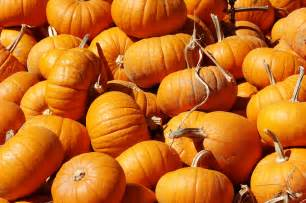 pumpkins for sale at the hunter farm this year wedgwood