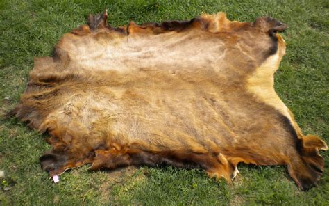 Tanned Hides For Sale Tanned Hides And Furs