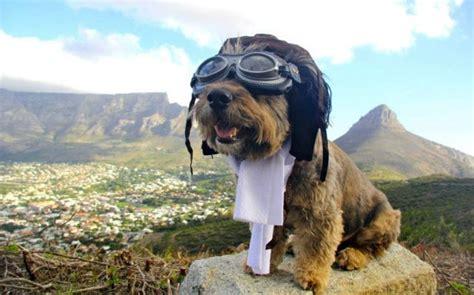 amazing dogs the amazing traveler 27 pics izismile