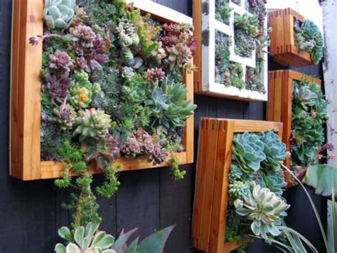 how to grow a vertical succulent garden world of succulents