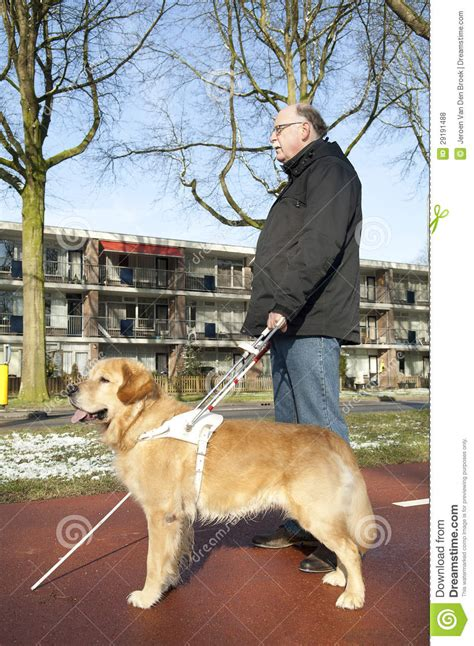 Letters For Blind People Guide Dog Is Helping A Blind Man Royalty Free Stock Photos