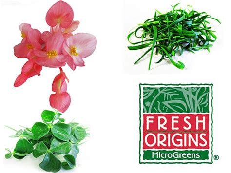 edible flowers fresh origins page 3 pma foodservice conference highlights and now u know