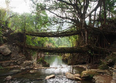 what is root bridge double decker living root bridge meghalaya a stunning