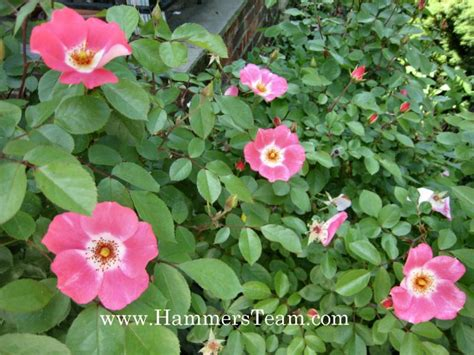 another last blast of summer flowers bergen county new farewell to summer from a garden state gardener part one