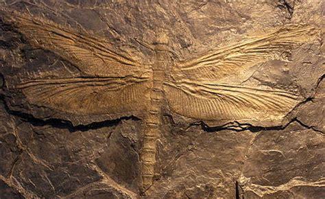 era paleozoica periodo devonico el paleozoico dev 243 nico carbon 237 fero y p 233 rmico