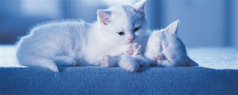comment pr 233 senter un nouveau chaton 224 chat catsan