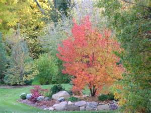 the skillful bee favorite garden trees and shrubs zone 5 6